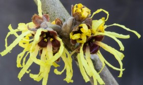8 Reasons You Should be Using Witch Hazel
